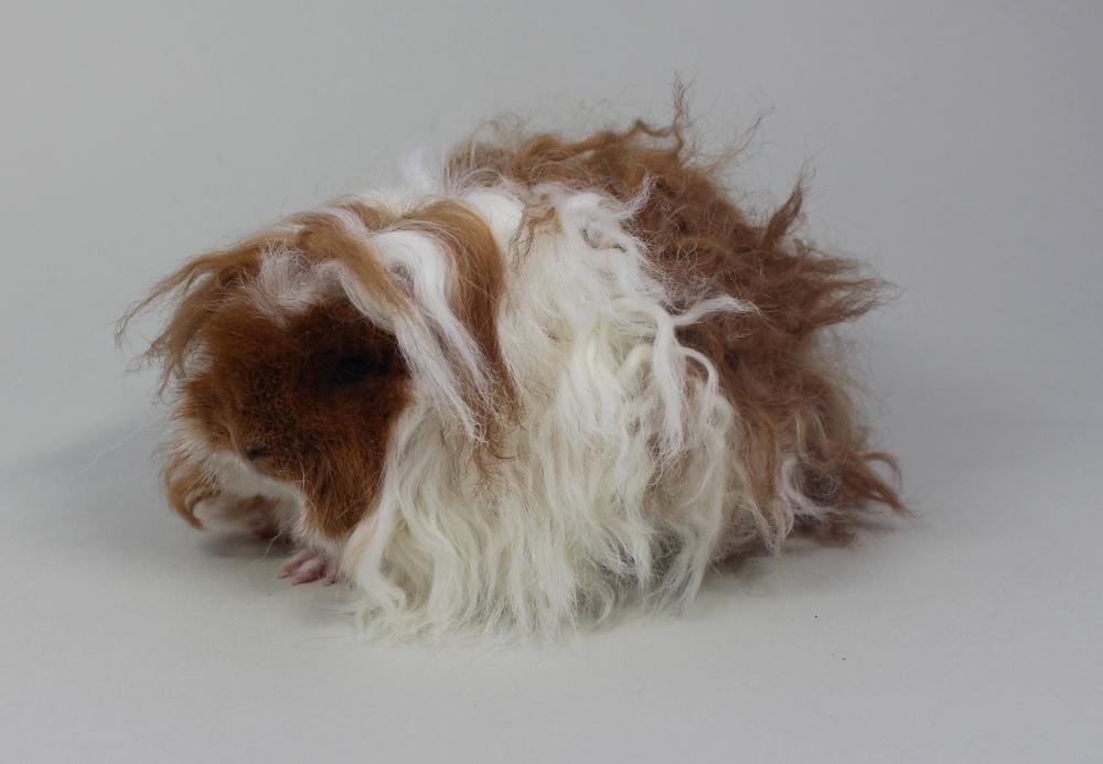 """Alpaka """"Cutiepie"""" in Rot-Weiß von Bianca Erades"""