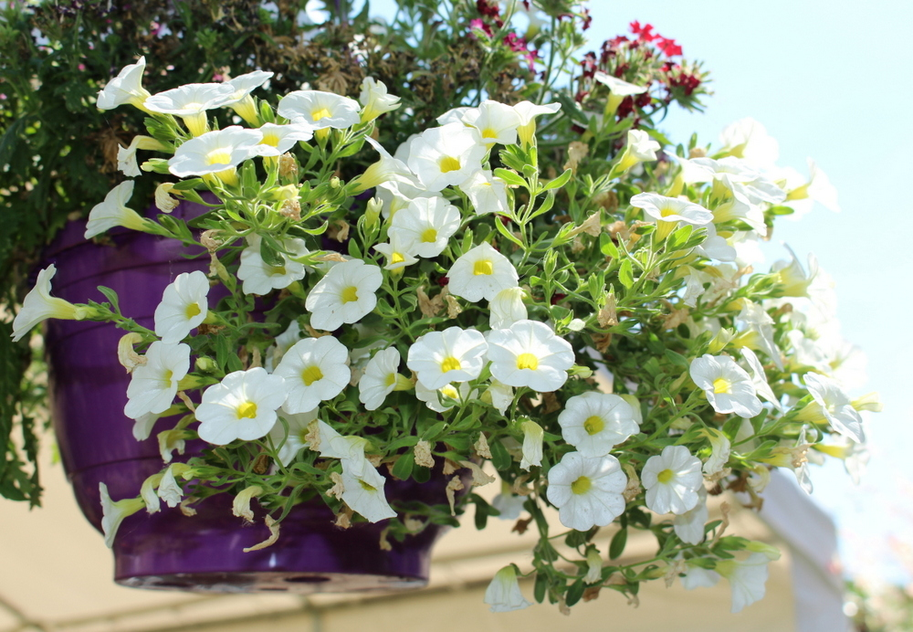 Sommerblütenpracht im Garten von Tina und Fries